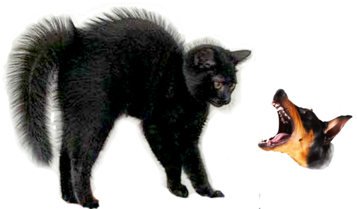 cat-scared-dog-transparent